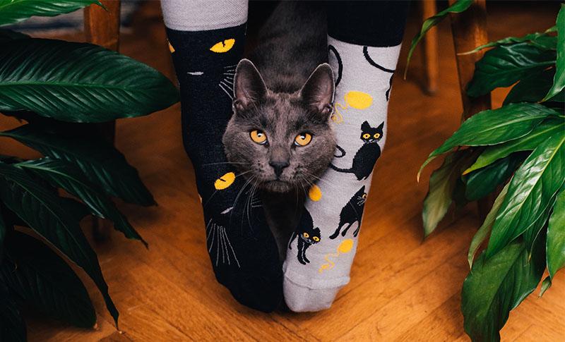 Dedoles čarape
