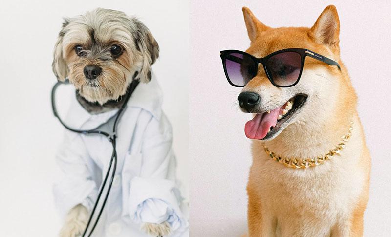 Toplotni udar - dva psa na slici poziraju
